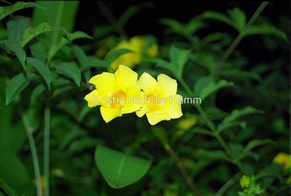 Yellow flower by Kristin Hamm