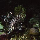 Lionfish by Kristin Hamm