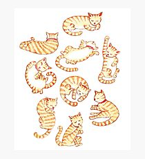 Orange Tabby Cats Photographic Print