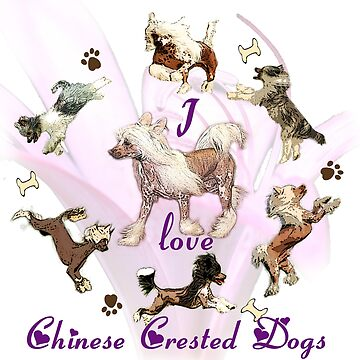 I love my Chinese Crested Dogs by Batiste
