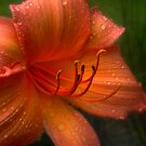 A Lily Gently Weeps by Michael Reimann