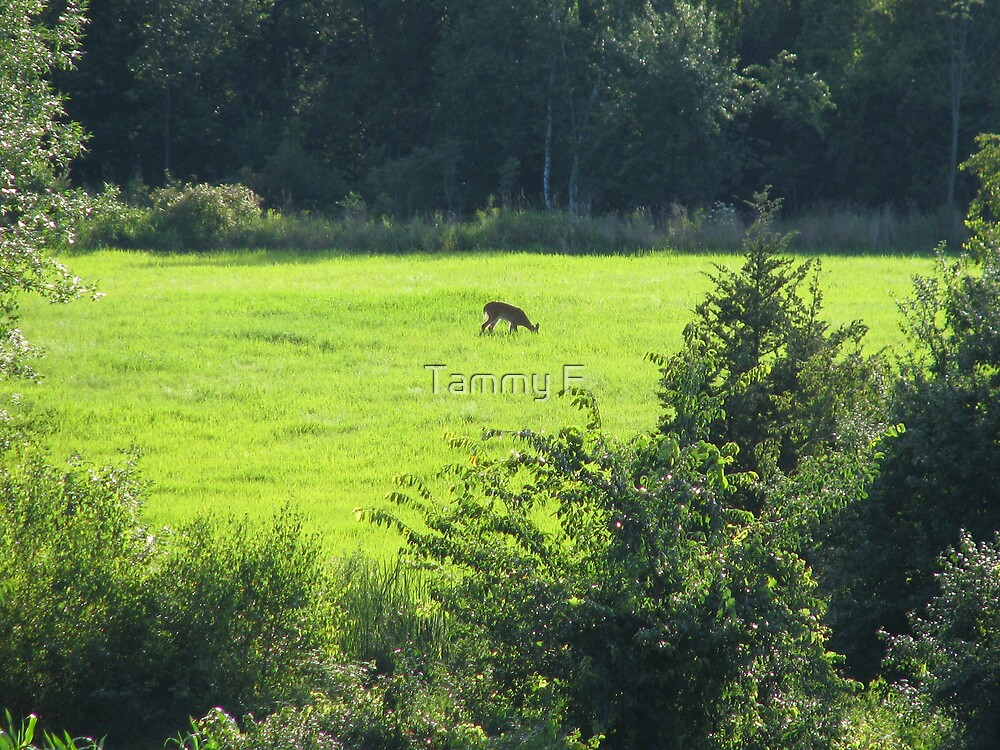 Deer in the Clearing by Tammy F