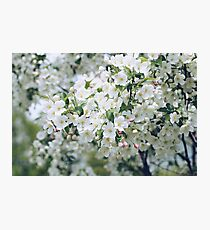 fleur Photographic Print