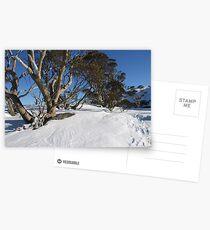 Snow Gums Postcards