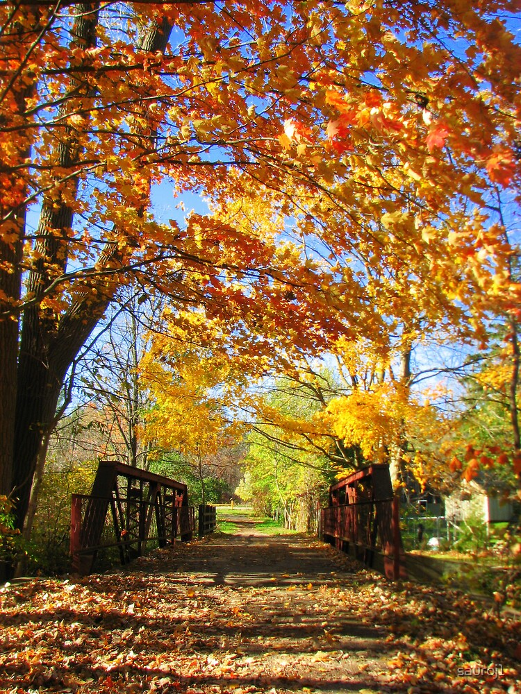 falling leaves by sauroj1