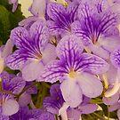 Purple Flower's by Forfarlass