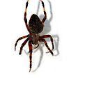 Along Came a Spider by Karri Klawiter