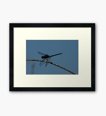 Blackie! Framed Print