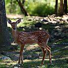 Bambi by BigD