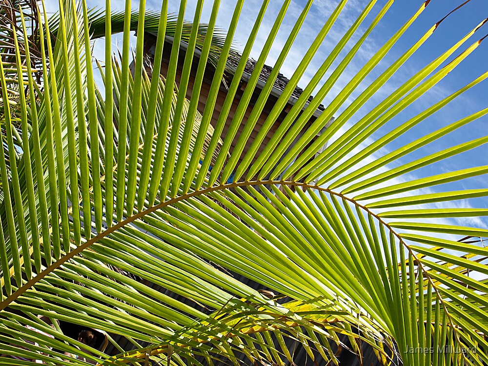 Palm Leaves by James Millward