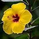 81718 Yellow  by pcfyi