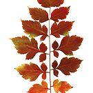 autumn leaves scanogram by Janine Paris