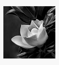 A Grand Dame Photographic Print