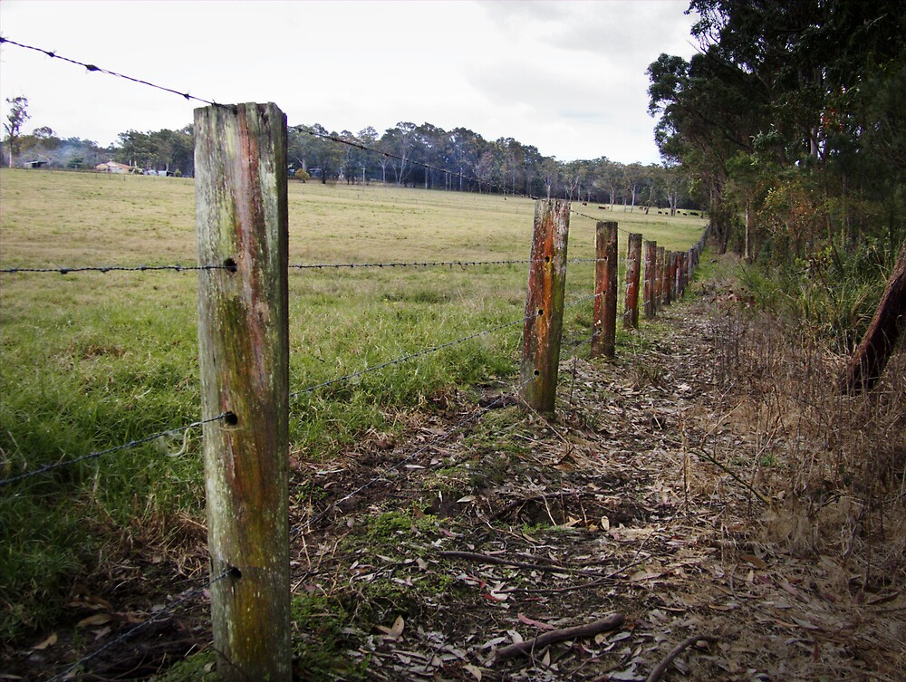 the fence line by adam pearson