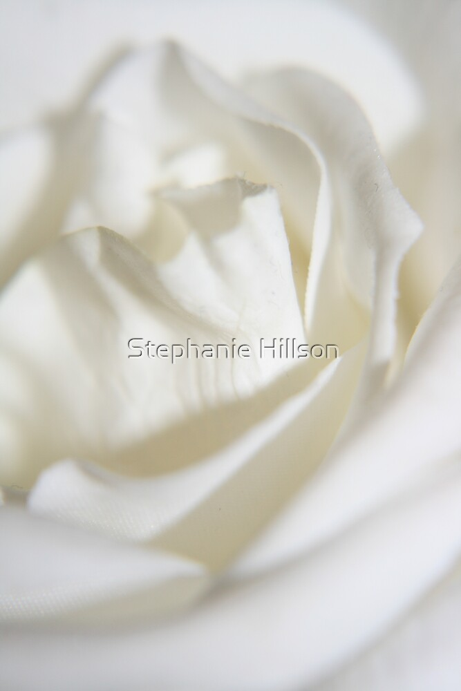 White Rose by Stephanie Hillson