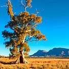 Cazneaux Tree in late afternoon sun, Flinders Ranges by Mark Richards
