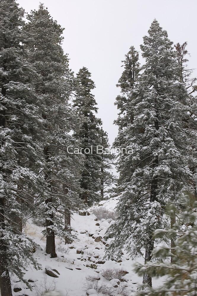 A Winter Walk in The Woods by Carol Barona