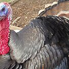 Gobble, Gobble by Alison Howson