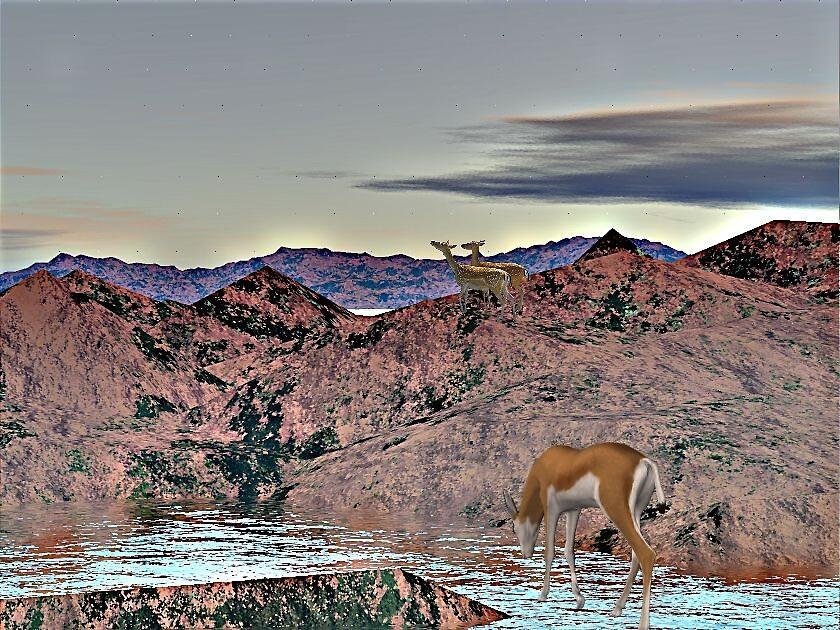 antilops by eraline