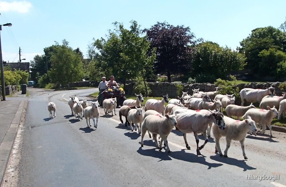 Rural England by hilarydougill