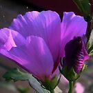 Purple flower and bud by ienemien
