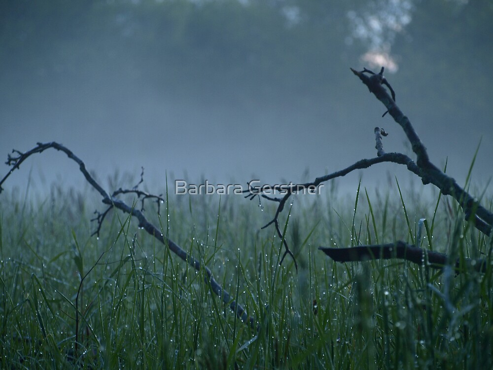 Morning Dew by Barbara Gerstner
