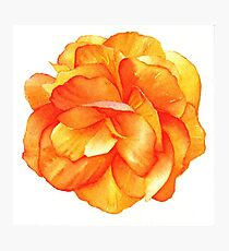 Bright Begonia - Watercolour Markers Photographic Print