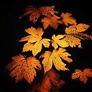 « Autumn Photo » par Philippe Sainte-Laudy