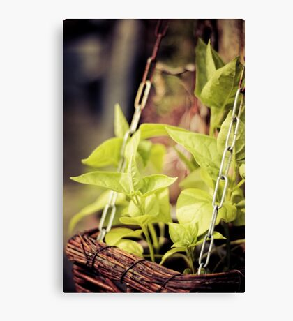 spicy greens Canvas Print