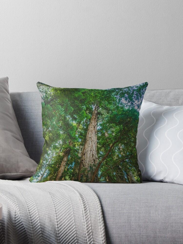 Redwood Skylite by Alius Imago