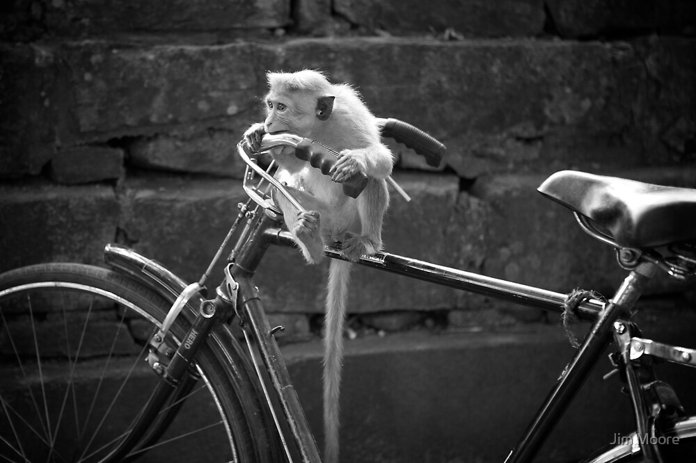 Monkey Bicycle Business by Jim Moore
