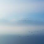 Wild Ducks above the misty Lake Geneva.....Switzerland by Imi Koetz