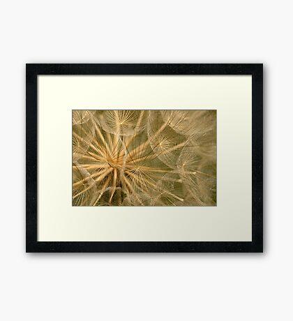 Delicate Seedhead Framed Print