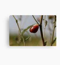 The snail crawls along the green branch close-up Canvas Print