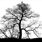 Bare Naked Tree by Jean Gregory  Evans