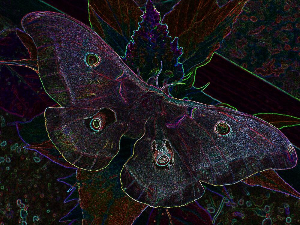 Optical Moth by Cajunbrn67