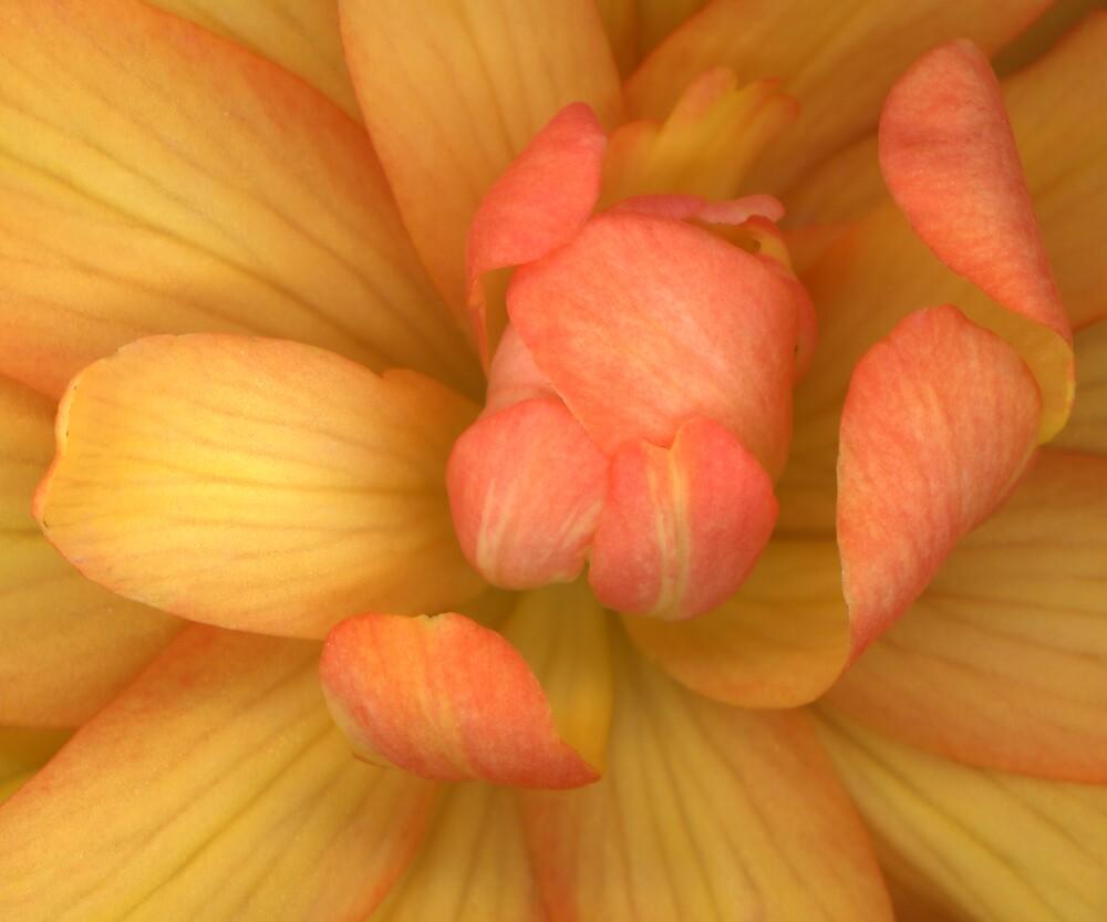 Orange Begonia by Peggy  Miller