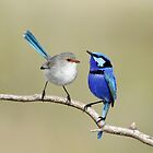 Birds in Love by Heather Thorning