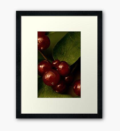 Shining Berries Framed Print