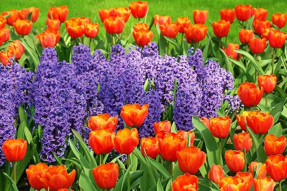 Springcolors by Arie Koene