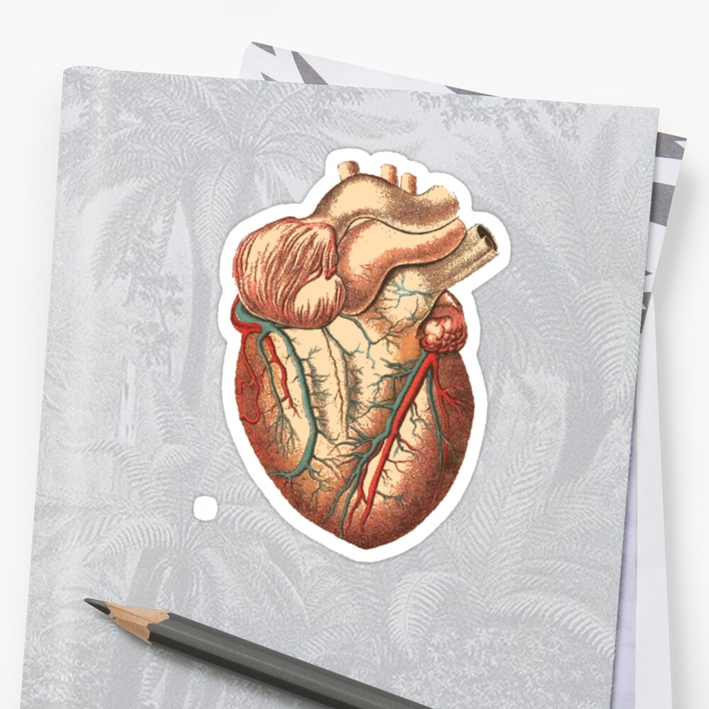 Halloween Zombie Biology Science Medical School Anatomy Heart