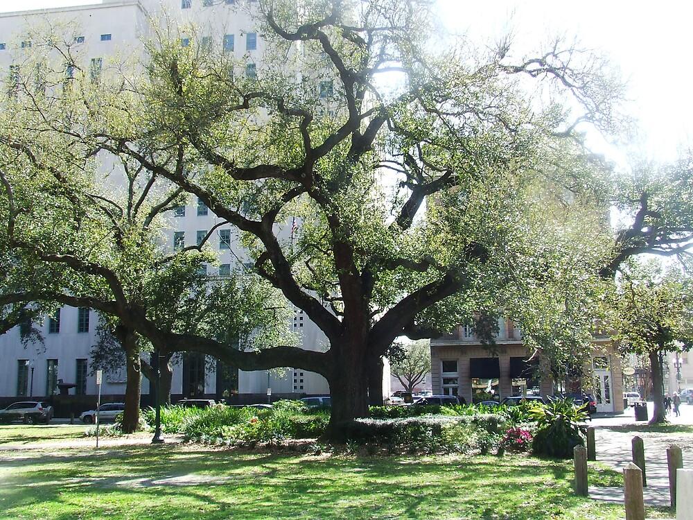 Old Oak by wldman68