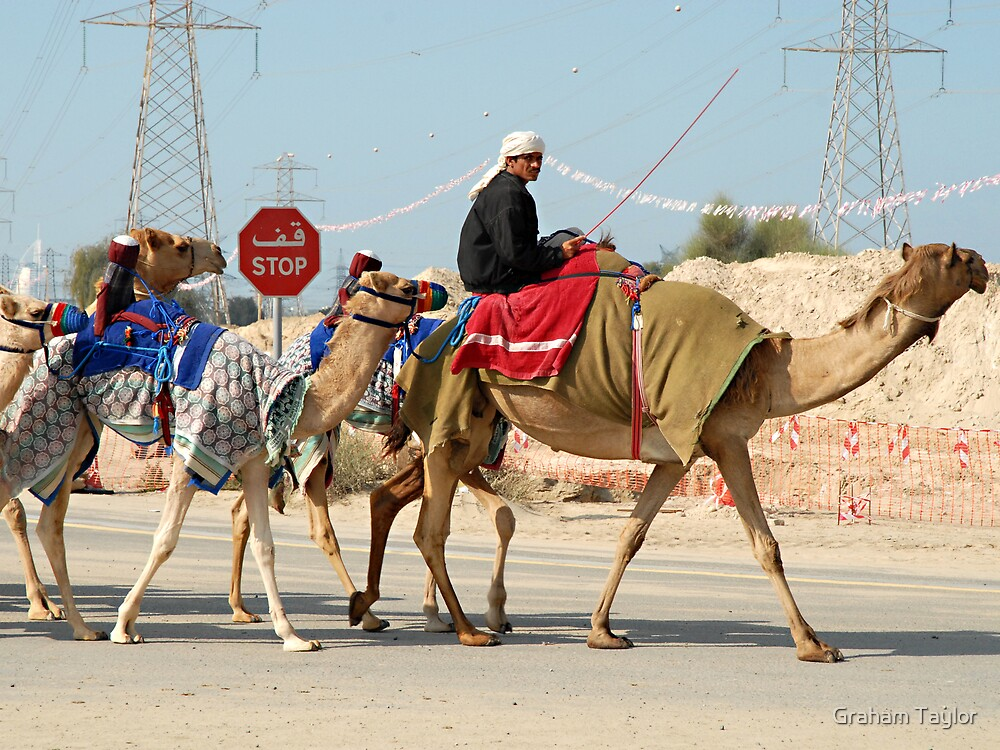 Camel Herder in Dubai by Graham Taylor