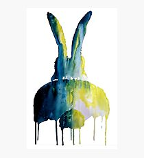 Bunbum bunny from behind Photographic Print