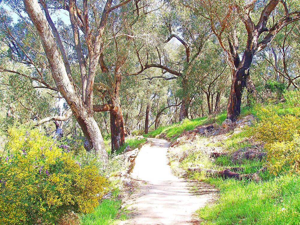 Wetlands walk trail by georgieboy98