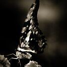 Butterfly II by Didi Bingham