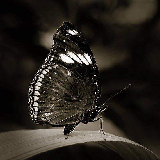 Butterfly V by Damienne Bingham