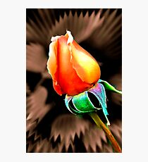 """""""'Tis the Last  Rose of  Summer."""" Photographic Print"""