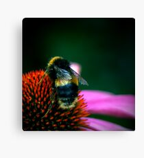 Buzz III Canvas Print