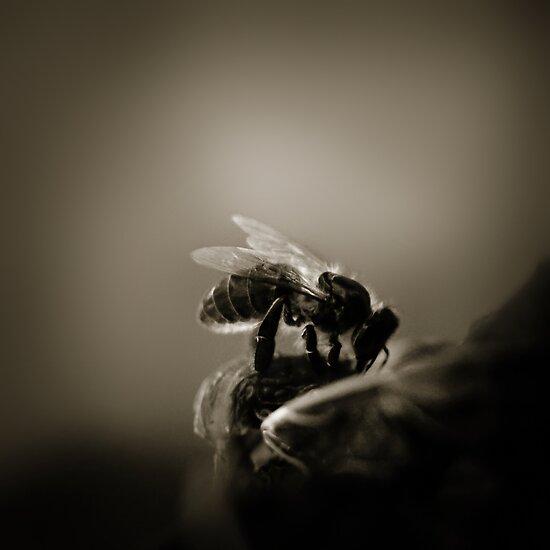 Buzz VI by Didi Bingham